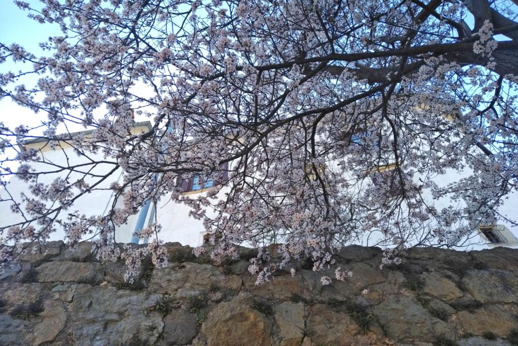 Raziščite pomlad na grajskem griču