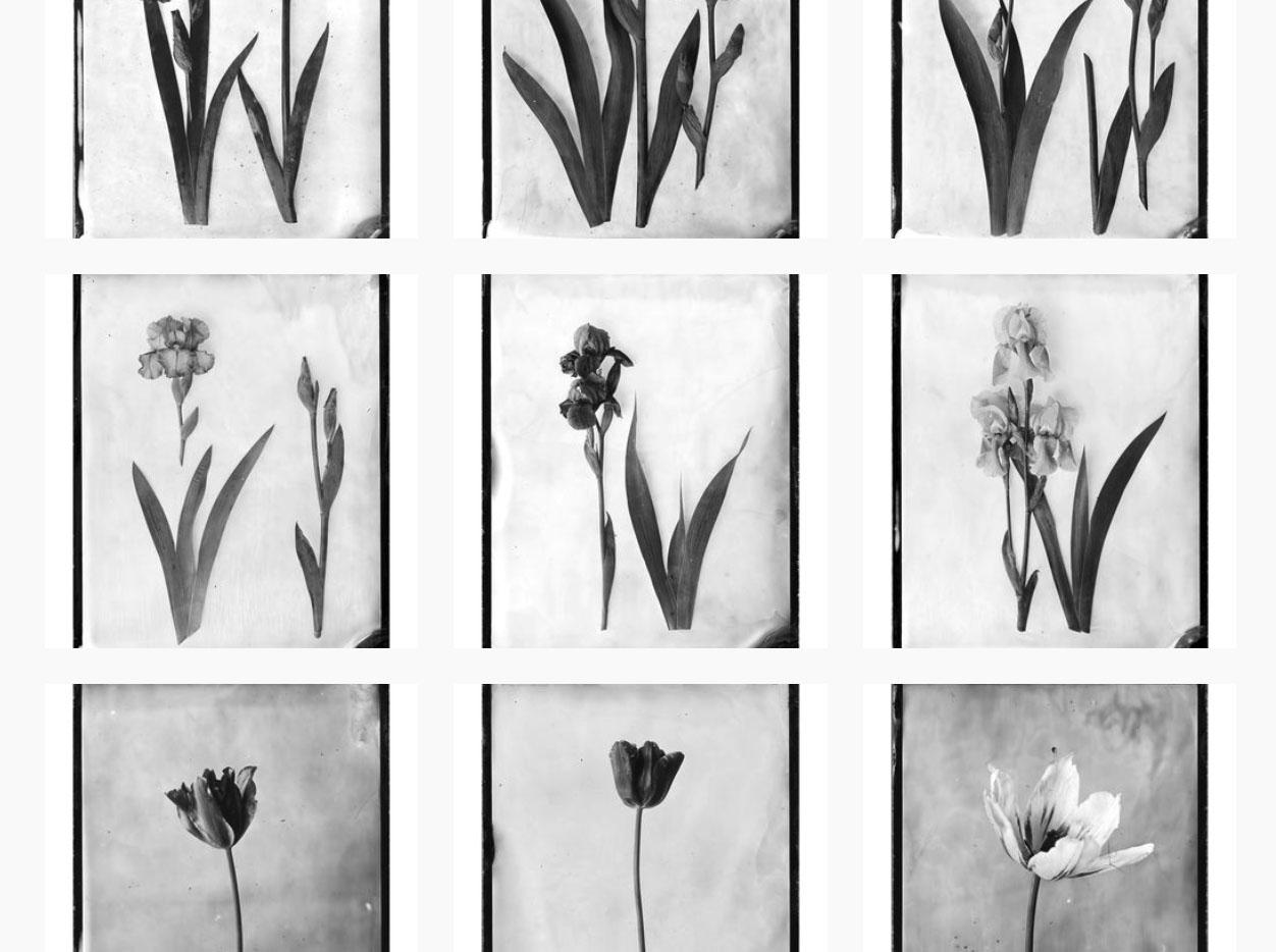 Odprtje razstave »Srebrni vrt« in fotografsko-zeliščarsko druženje na Grilovi domačiji ter dan odprtih vrat Spominskega centra 1991