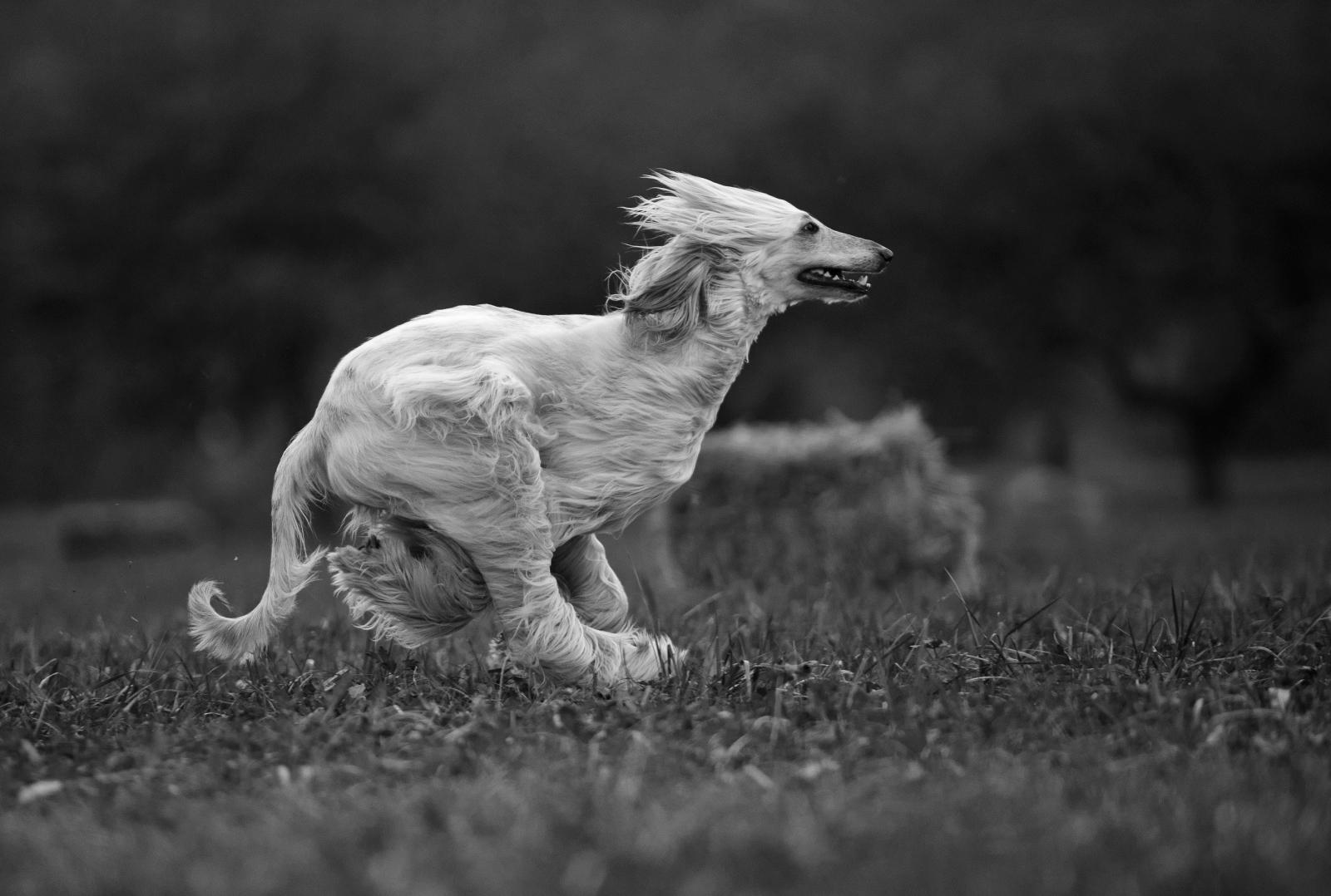 Predstavitev knjige Katje Krk, ogled Velenjskega gradu s pasjimi prijatelji in fotografska delavnica s Ksenijo Mikor