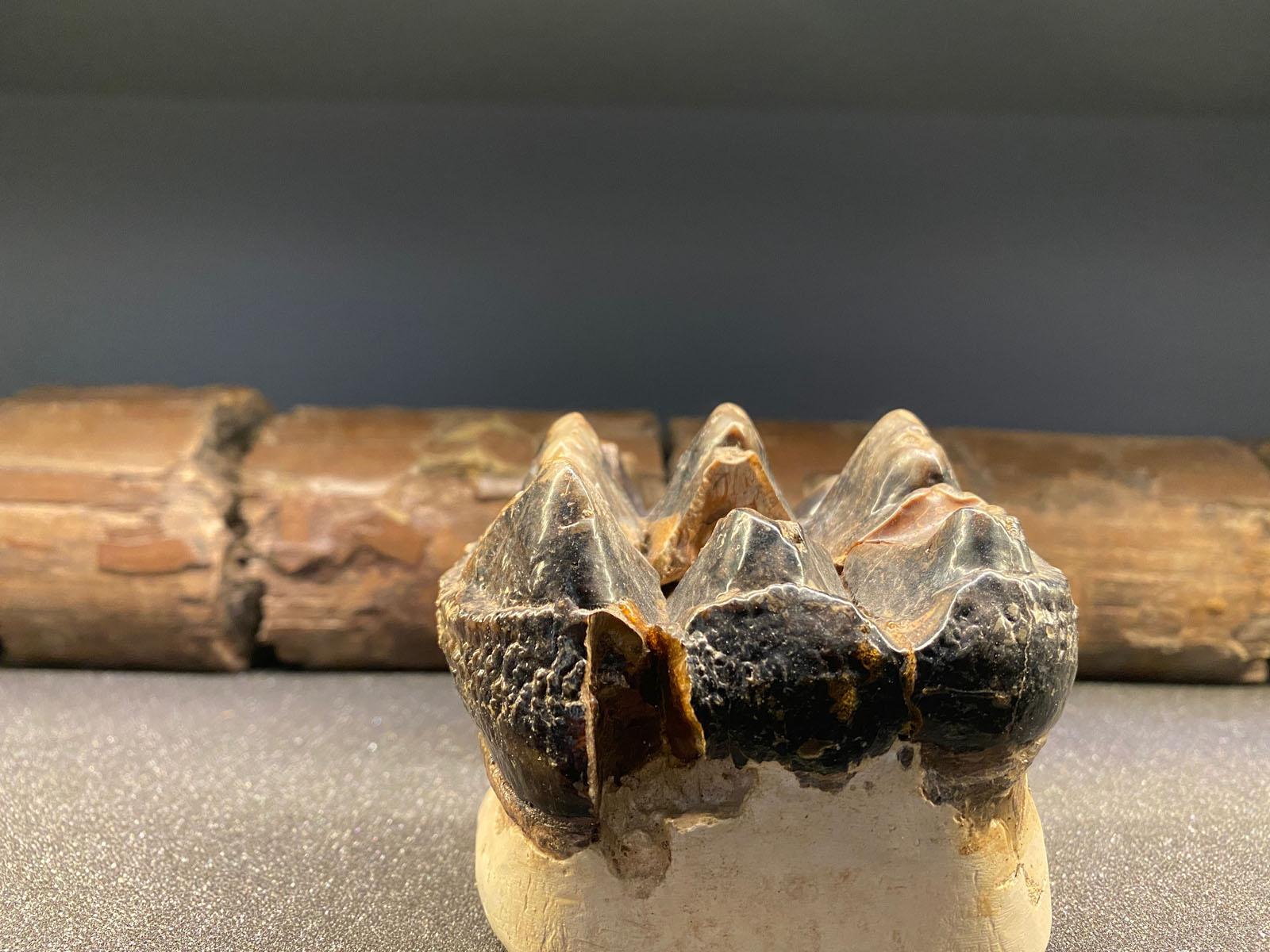 Podkast o mastodontu, Klepet pod arkadami in dogodek »Pokukajmo v kuhinjo škalske gospodinje iz začetka 20. stoletja«